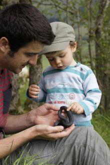 Couleuvre collier mélanique dès le plus jeune âge
