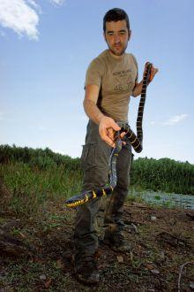 Matthieu Berroneau serpent malaisie