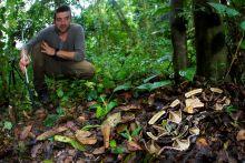 Matthieu Berroneau serpent
