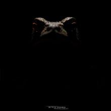 Bufo spinosus, Crapaud common, Crapaud épineux, Sapo, Common toad, Matthieu Berroneau, night, dark