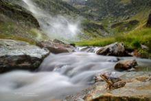 Rana temporaria, Grenouille rousse, Common Frog, Matthieu Berroneau, France, stream, ruisseau, pyrénées, cascade