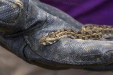 Kenya Horned Viper, Kenya