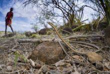 Tanganyika Sand Snake and Masai, Kenya