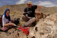 Pseudocerastes urarachnoides, Spider-tailed horned viper, Vipère à queue d'araignée, Iran, Matthieu Berroneau