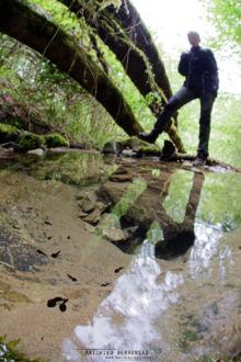 Rana pyrenaica, Pyrenean frog, Grenouille des Pyrénées, France, Matthieu Berroneau, tadpole, têtard, comptage, suivi