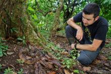 Lachesis stenophrys, Central American bushmaster, Matabuey, Bush master, Costa Rica, Matthieu Berroneau
