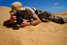 Cerastes vipera, Sahara Sand Viper, Vipère des sables, Matthieu Berroneau, Maroc, Snake, Morocco, photo, shoot