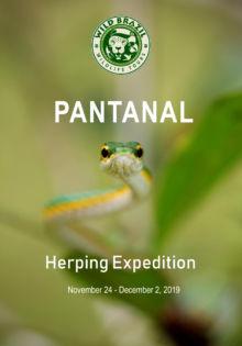 Expédition au Pantanal avec Wild Brazil, Matthieu Berroneau, Brésil