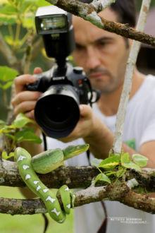 Emerald tree boa, Boa canin, Corallus caninus, Guyane, French Guiana, Matthieu Berroneau