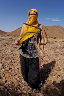Echis pyramidum, Maroc, Roman's Saw-scaled Viper, Morocco, Matthieu Berroneau, Echide, vipère, serpent, snake