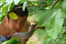 Zamenis longissimus, Couleuvre d'Esculape, Aesculapian snake, France, Matthieu Berroneau,