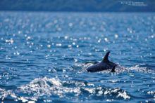 daupin, komodo, indonésie, sea, mer, océan, ocean, matthieu Berroneau, dolphin