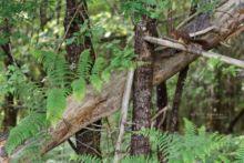 Ecureuil roux, Sciurus vulgaris, Red Squirrel, France, Matthieu Berroneau
