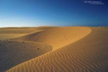 désert, desert, Maroc, Morocco, landscape, paysage, habitat, Cerastes vipera, Matthieu Berroneau