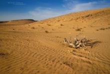 Persian Horned Viper, Pseudocerastes persicus, Israel, Israël, Matthieu Berroneau, habitat, milieu, landscape