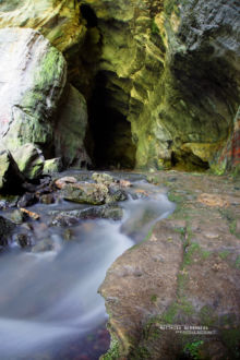 Paradactylodon persicus, Gorgan Cave Salamander, Iran, Matthieu Berroneau, habitat, cave, grotte, landscape, milieu