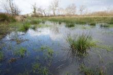 Pelodytes punctatus, Pélodyte ponctué, Matthieu Berroneau, France, Parsley frog, Sapillo moteado común, habitat, milieu, landscpae