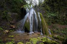 Rana pyrenaica, Pyrenean frog, Grenouille des Pyrénées, France, Matthieu Berroneau, habitat, torrent, stream, cascade