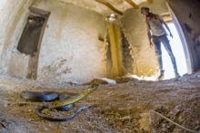 Malpolon monspessulanus, Couleuvre de Montpellier, Montpellier snake, Matthieu Berroneau, Espagne, Spain, Culebra bastarda, Espana