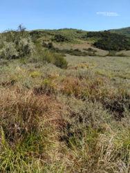 L'habitat de Montatheris hindii - Kenya Montane Viper habitat