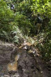 Traces d'éléphants de forêt - Forest Elephant tracks
