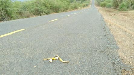 Banana DOR